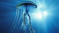 Ocean Life 30950