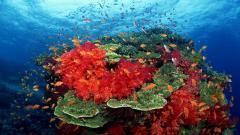 Ocean Life Wallpaper 30952