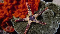 Ocean Life Background 30951