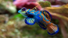 Ocean Life Wallpapers 30945