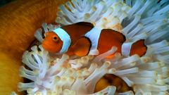 Ocean Life Wallpapers 30949