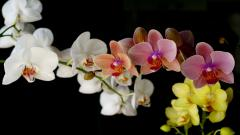 Orchid Wallpaper 24558