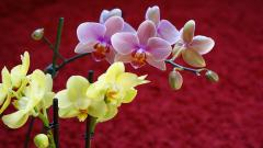 Orchids 24557