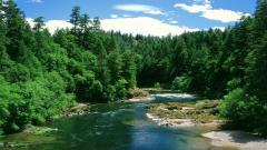 Oregon Pictures 21353