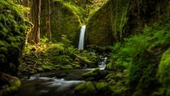 Oregon Wallpaper HD 21355