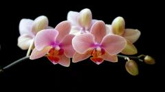 Pictures Of Orchids 24559