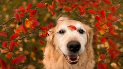 Pretty Dog Look Wallpaper 44128
