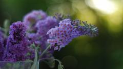 Purple Macro Backgrounds 37996