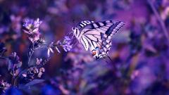 Purple Macro Wallpaper 37992