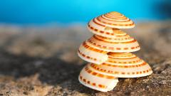 Scallops Wallpaper HD 43406