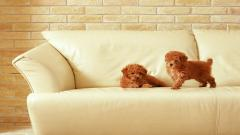 Sofa Wallpaper 42607