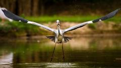 Stork Bird Wallpaper 44576