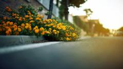 Street Flowers Wallpaper 44581