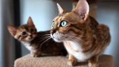 Stunning Cat Close Up Wallpaper 39679