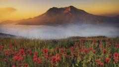 Stunning Flower Landscape 29014
