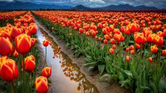 Stunning Flower Landscape 29018