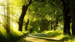 Stunning Forest Road Wallpaper 36159