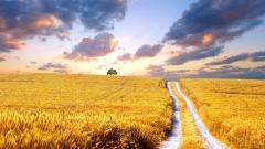 Stunning Wheat Wallpaper 24072