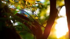 Sunlight HD 36075