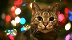 Tabby Cat City Lights Wallpaper 44111