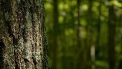 Tree Bark 26070