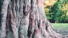 Tree Bark 26075