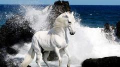 White Horse Wallpaper 25693