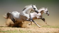 White Horse Wallpaper 25694