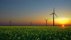 Windmills 26065