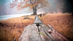 Wood Fence Close Up Wallpaper 44951