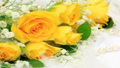 Yellow Roses 29680
