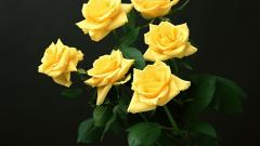 Yellow Roses Wallpaper 29674