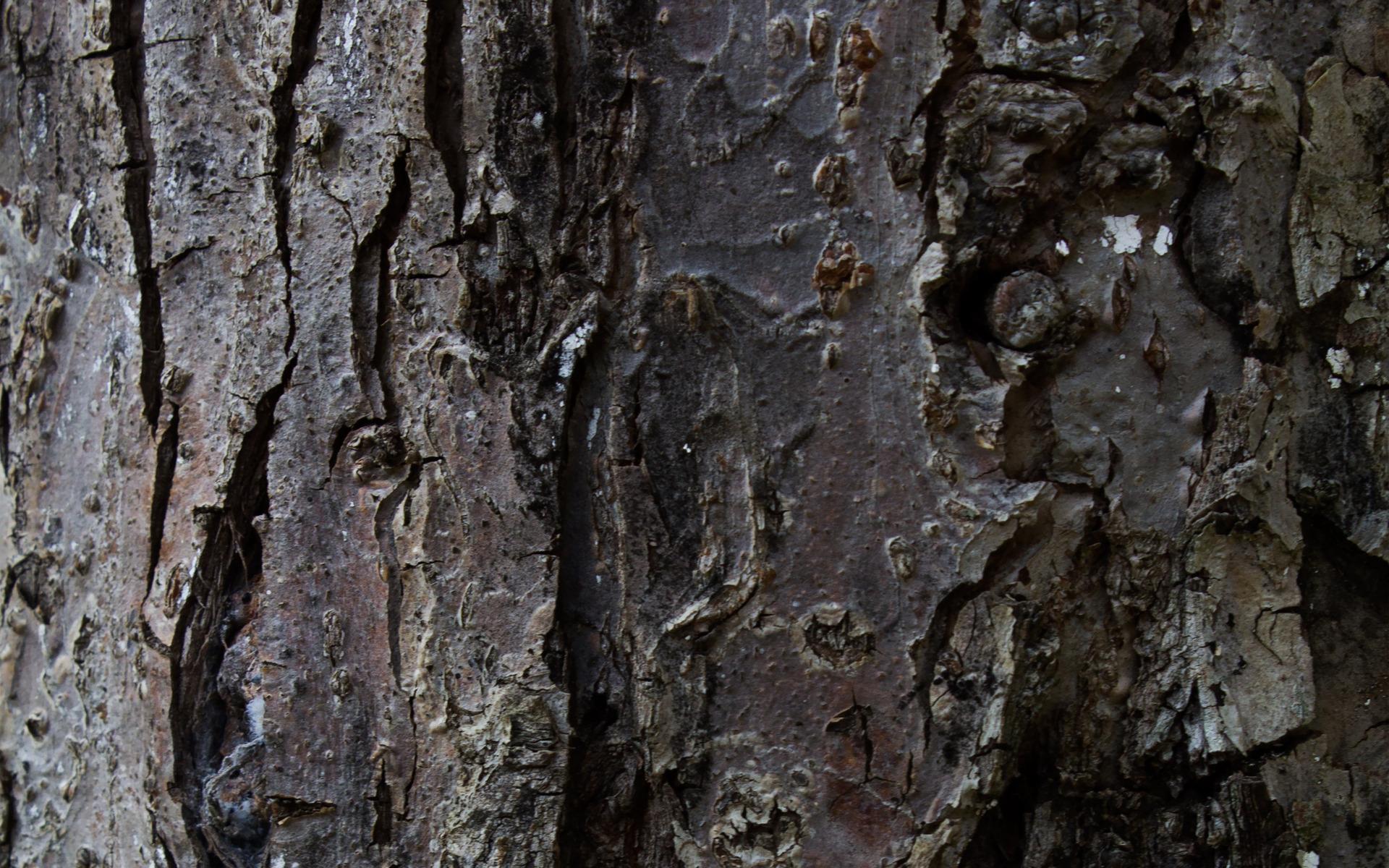 tree bark 26073