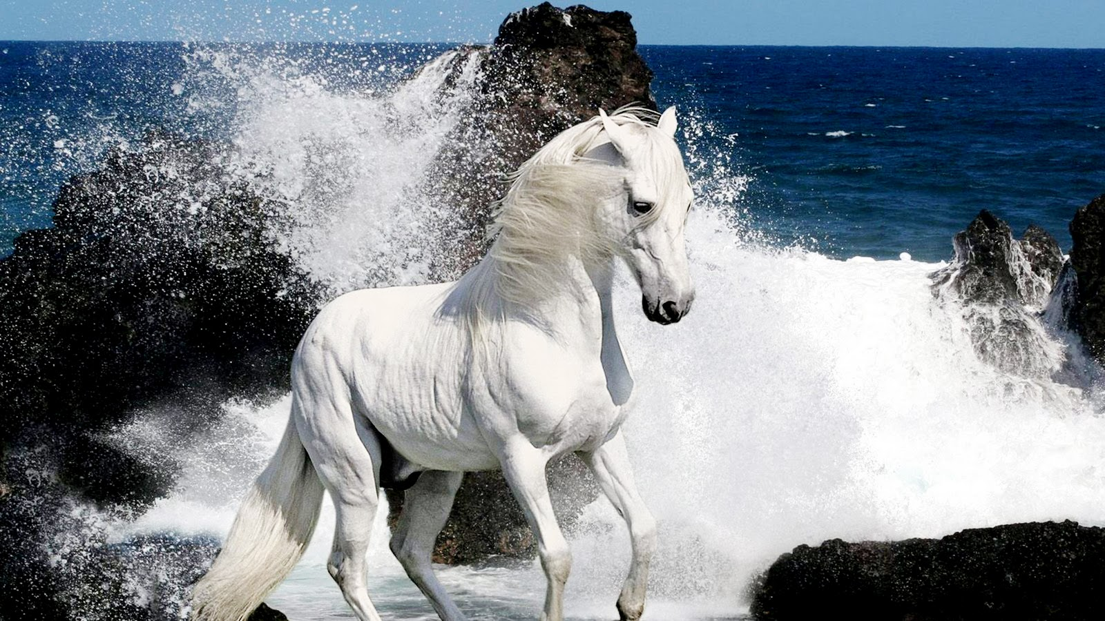 white horse live wallpaper