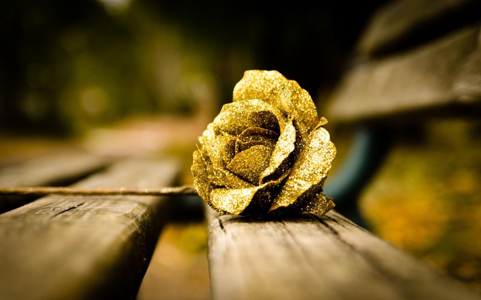 Wonderful Gold Rose Wallpaper 44883
