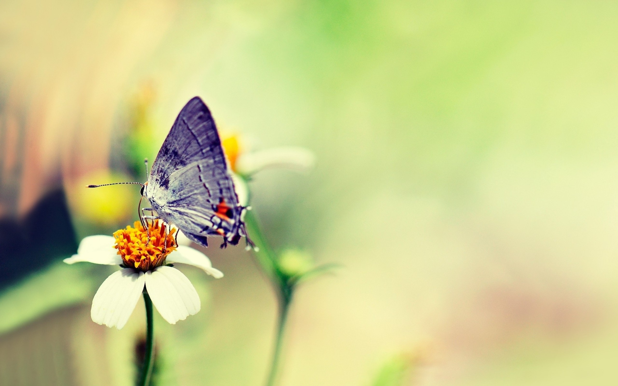 Download Beautiful Butterfly Wallpaper 47016 2560x1600 Px High