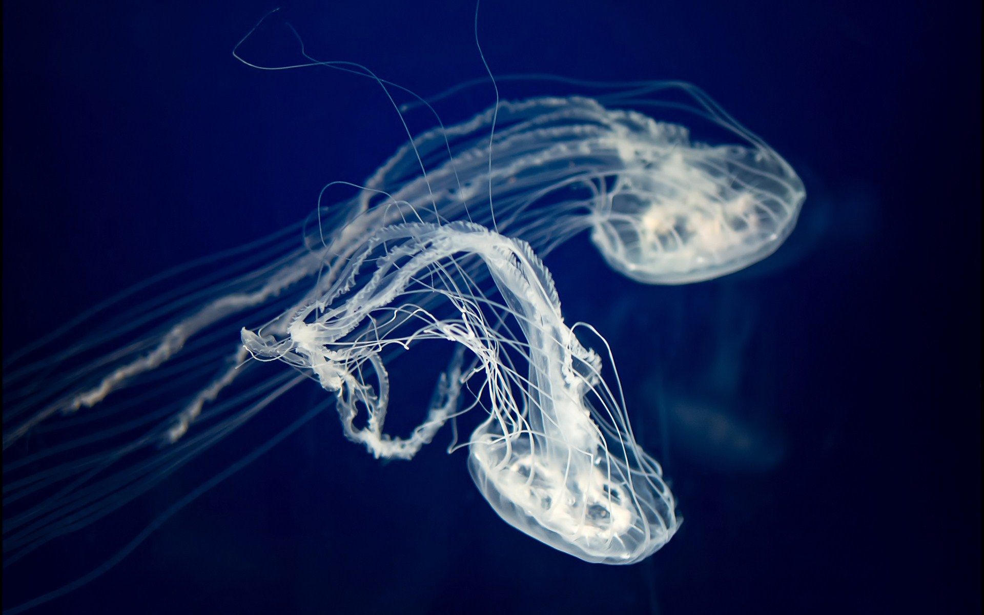 cool jellyfish wallpaper 45571
