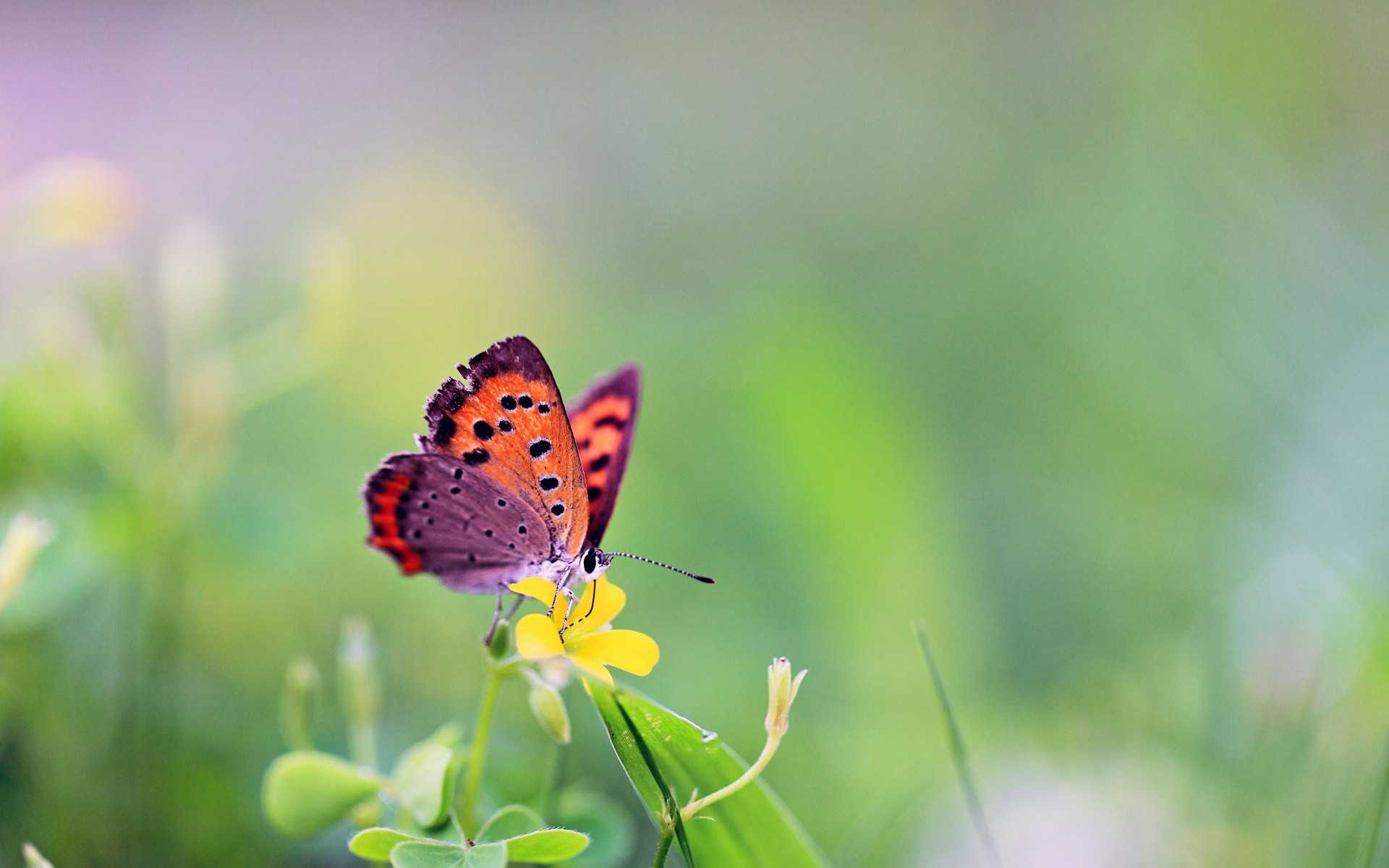 gorgeous butterfly wallpaper 47015