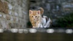 Cat Wallpaper HD 45617