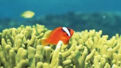 Cute Fish Wallpaper 45607
