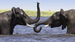Elephant Wallpaper 46487