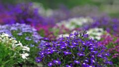 Violet Flowers Wallpaper 47019