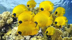 Wonderful Fish Wallpaper 45608