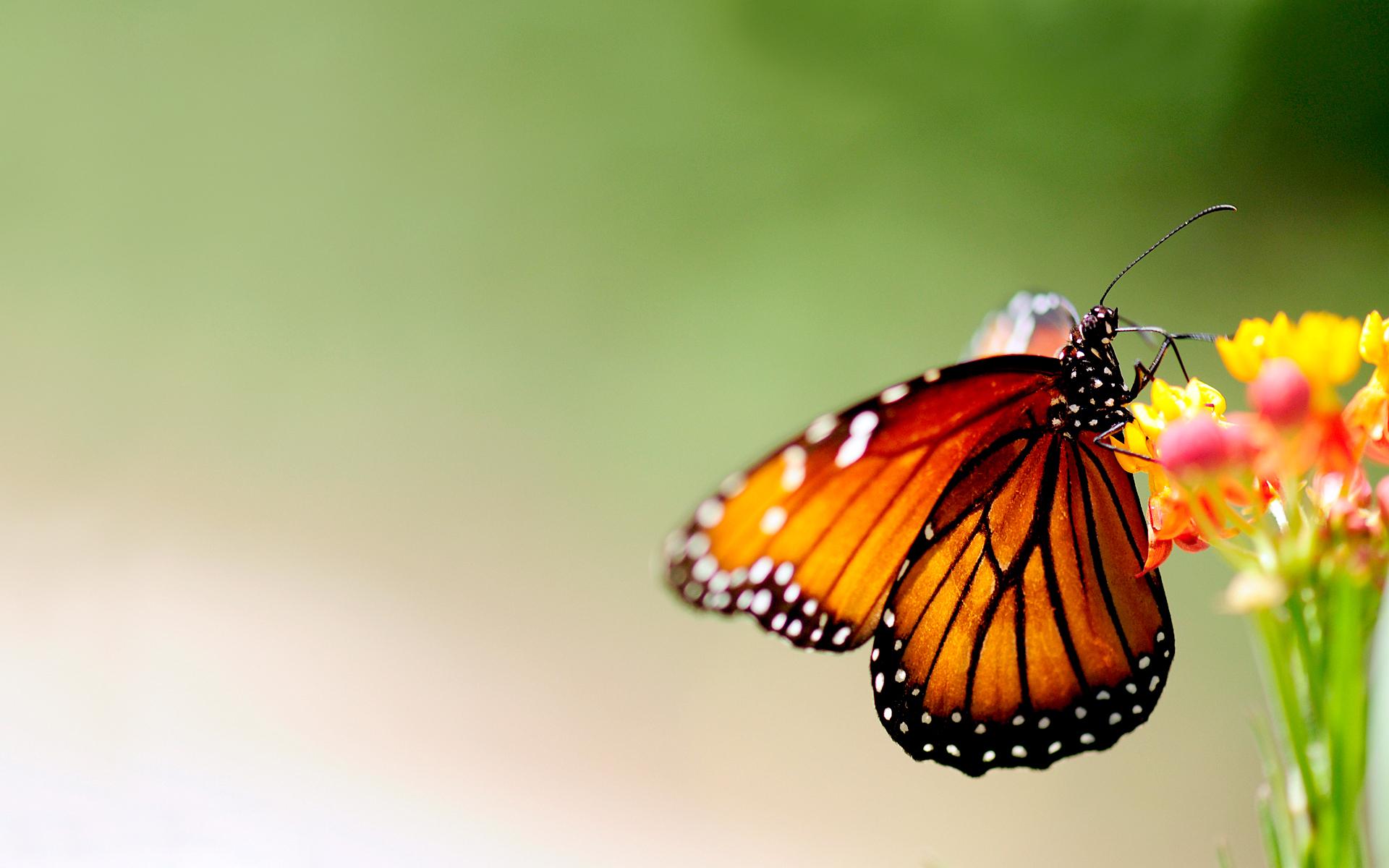wonderful butterfly wallpaper 47014