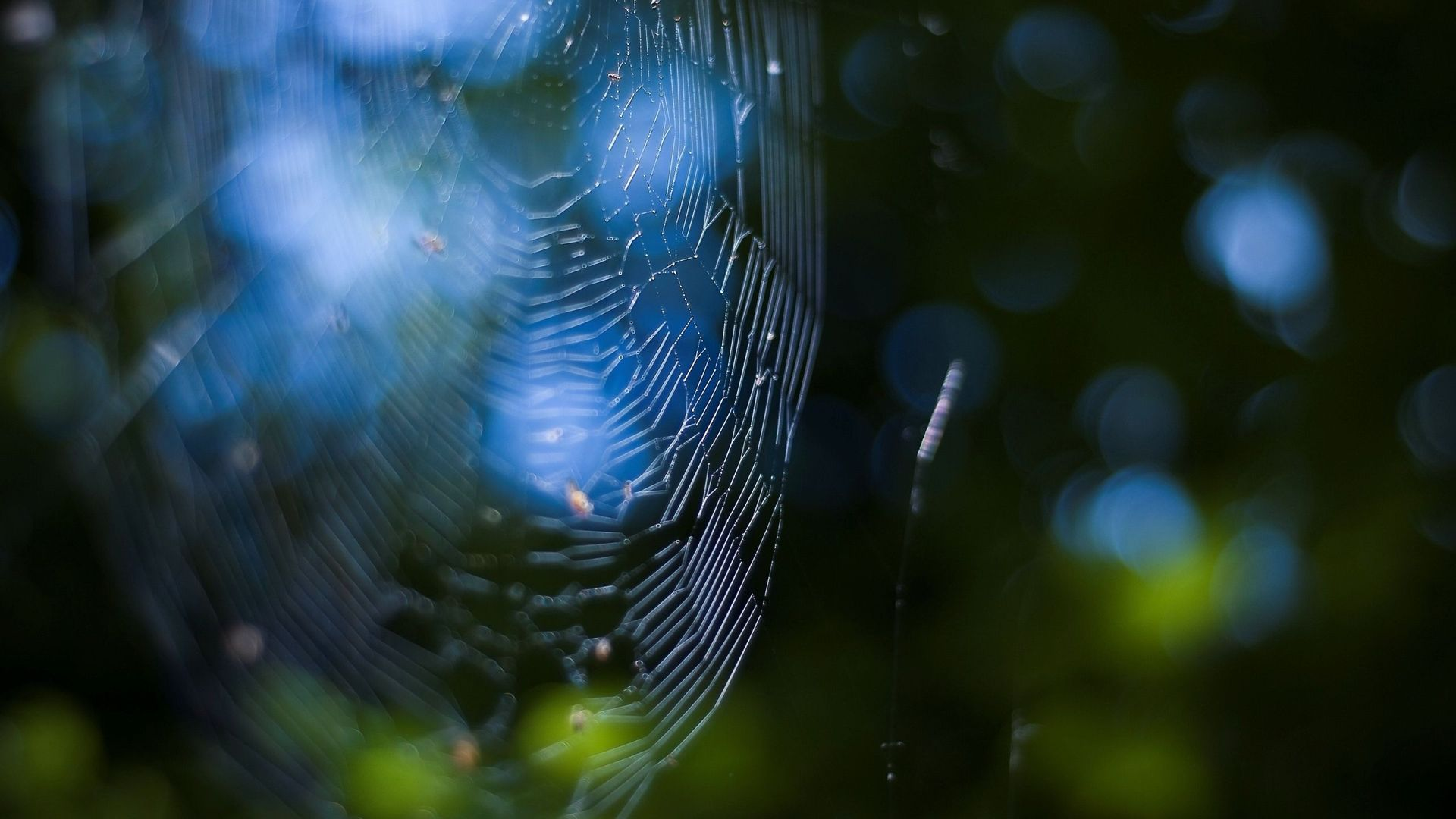 awesome spider web wallpaper 45708