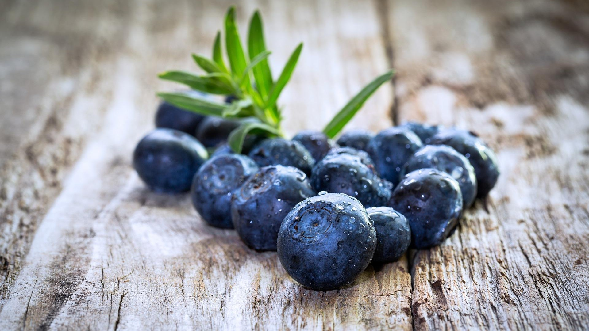 blueberry wallpaper hd 47801