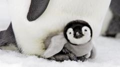 Adorable Penguin Wallpaper 45690