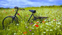 Bicycle Wallpaper 46134