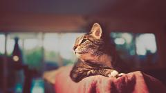 Cat On Couch Wallpaper 45434
