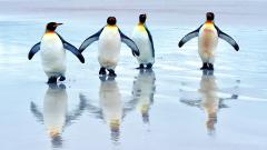 Penguin Wallpaper 45689